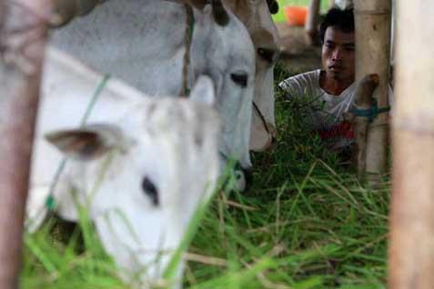 Tidak Asal Impor Daging
