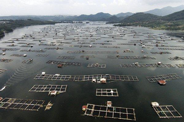 BUDI DAYA PERIKANAN : 2 Pulau Dongkrak Konsumsi Pakan Ikan