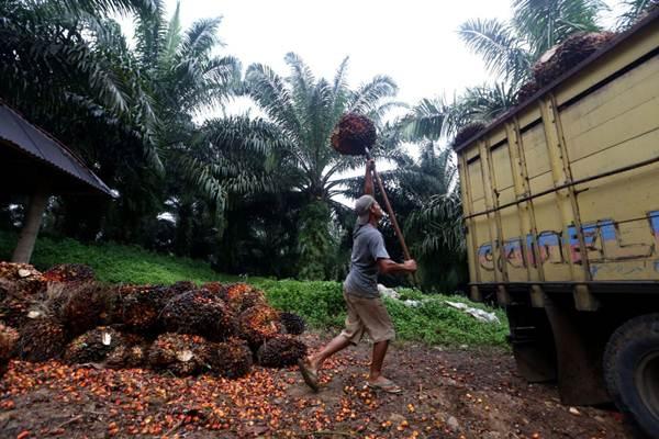 SIMPLIFIKASI SYARAT EKSPOR : Indonesia Bisa Makin Haus Barang Mentah