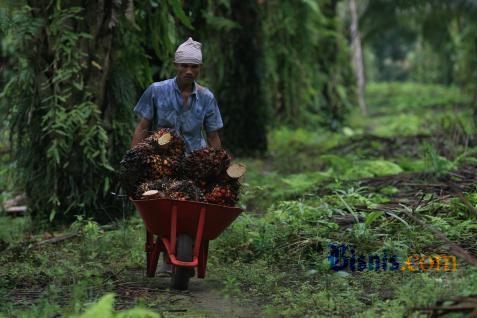EMITEN PERKEBUNAN : Babak Baru FAP Agri