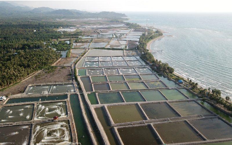 OPINI  : Ekspor Udang Bakal Melejit?