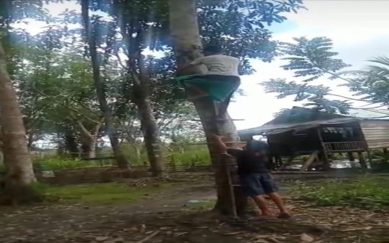 Siswa memanjat pohon untuk menangkap sinyal telekomunikasi saat belajar daring/Bisnis-Dinda Wulandari