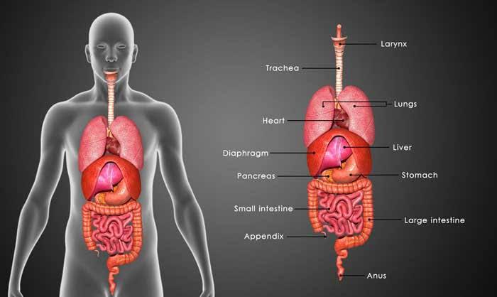 24+ Liver manusia ada berapa trends