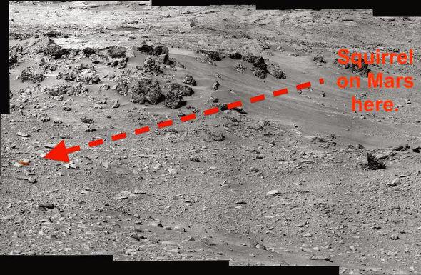 nasa temukan tupai alien di planet mars