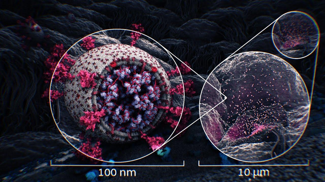 foto virus corona covid