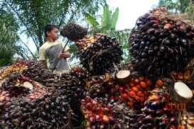Pemerintah Kaji Pengurangan BK Sawit bagi Pemilik ISPO