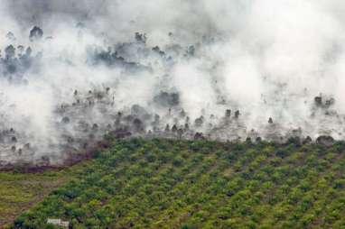 Desa Bebas Api Ampuh Tekan Karhutla