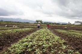 Asuransi Pertanian : Solusi Ini Bisa Tingkatkan Penetrasi