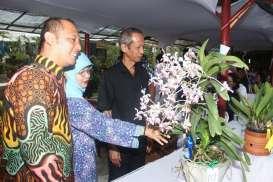 Festival Anggrek Vanda Tricolor, Ini Rangkaiannya