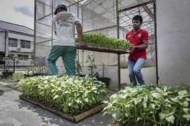 Puslitbang Hortikultura Perkenalkan Inovasi Bawang & Cabai