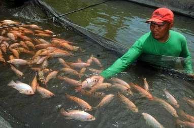 Badung Bangun Balai Benih Ikan Baru Pacu Aquakultur