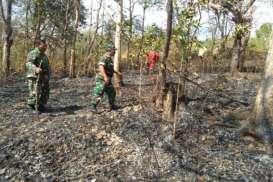 Gara-Gara Bakaran Sampah, Hutan Gunung Belik Lesung di Bulu Sukoharjo Hangus