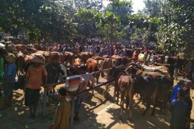 Iduladha: Harga Sapi di Pasar Hewan Bekonang Sukoharjo Naik Rp200.000 Per Hari