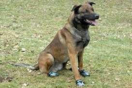 16 Warga Digigit Anjing, Rabies Intai Sukoharjo
