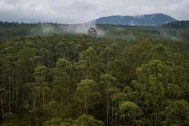 Tunda Waktu Tebang Pohon, KLHK Salurkan Pinjaman untuk Petani Hutan