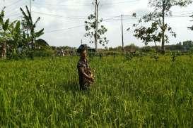 Patok Proyek Jalur Kereta Jogja-Borobudur Dicabuti Petani