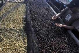 Produksi Kopi di Brasil Terpantau Cerah, Harga Melemah