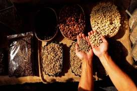 Industri Kopi Vietnam Lesu, Petani Beralih ke Alpukat