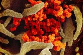 Begini Kondisi Paru-paru Korban Virus Corona
