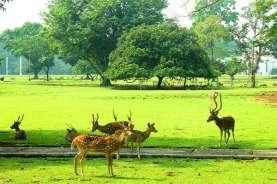 Kebun Raya Bogor Dibuka Pekan Depan hanya untuk Anggota