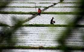 Pemprov Babel Gandeng Agrinas Garap Usaha Pertanian Berkelanjutan