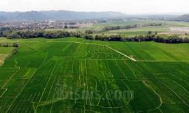 Banyak Ditekuni, Pola Pertanian Terpadu Dukung Lumbung Pangan
