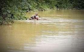 Terobos Banjir, Penyuluh Pertanian Gunakan Batang Pisang