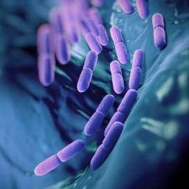 Khasiat Tak Terduga Jika Rutin Konsumsi Probiotik