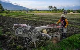 Tumbuh Positif, Pemerintah Perlu Permudah Investasi Sektor Pertanian