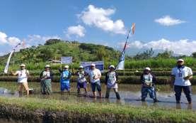 Tingkatkan Produktivitas Pertanian, Pupuk Kaltim Kembali Gelar Demplot Padi di Desa Peladung Bali