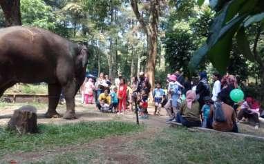 Libur Panjang, Kebun Binatang Bandung Diserbu Wisatawan