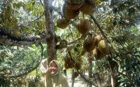 Klaster Durian Unggul Lokal Dikembangkan di Blitar