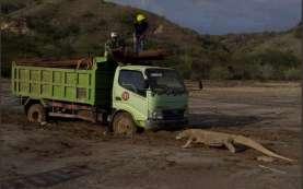 Sudjiwo Tedjo: Boleh Tak Setuju Pembangunan Jurassic Park Komodo, Tapi...