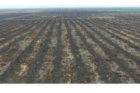 Kementan dan Masyarakat Gambut Kompak Food Estate Utamakan Lahan Mineral