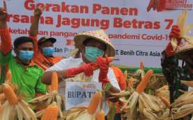 Kabupaten Jembrana Panen 19,9 Ton Jagung, Bagian Strategi Ketahanan Pangan