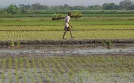 Masuk Masa Paceklik, Sektor Pertanian Bisa Tetap Positif di Kuartal IV