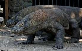 Luhut Singgung Lagi Rencana Moratorium Wisatawan ke Taman Nasional Komodo
