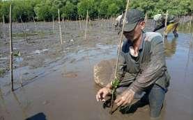 Pulihkan Ekosistem Pesisir, Tanam Mangrove 2020 Capai 2,9 Juta Batang