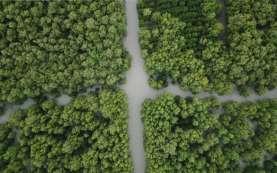 Pulihkan Ekosistem Pesisir, Ini Target Tanam Mangrove 2021