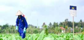 Historia Bisnis : Nasib Bentoel (RMBA) Tanpa Philip Morris