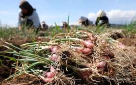 Food Estate, Kalteng Sudah Siapkan 21.000 Hektare Lahan