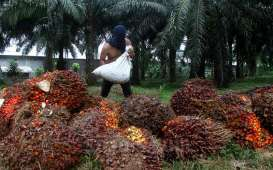 Kemitraan Asean-Uni Eropa Buka Jalan Perdagangan Minyak Sawit