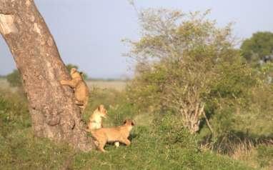 Ini Tempat Paling Menarik di Afrika untuk Anda Kunjungi