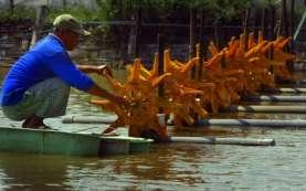 Pembangunan Shrimp Estate di Aceh Ditargetkan Selesai Tahun Ini
