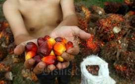 Harga Sawit Riau Pekan Ini Rp2.517,13 per Kg