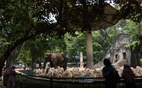 Sepaket TMII dan Ancol, Ragunan Juga Ditutup Hingga Senin 17 Mei