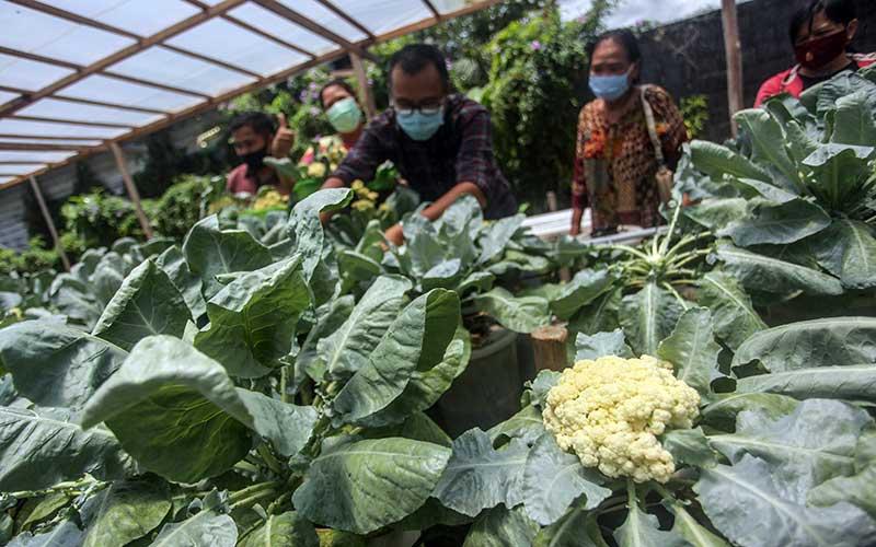 Kelompok Tani Uluh Pangaringan Ajak Masyarakat Memanfaatkan Lahan Perkarangan Untuk Bertani