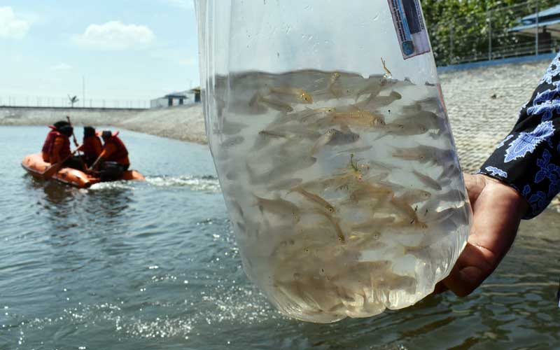 Pemprov Jatim Berikan Bantuan 130 Ribu Benih ikan Untuk Tingkatkan Konsumi Ikan Masyarakat