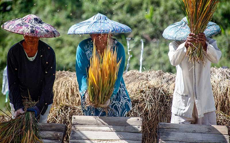 Pemerintah Dorong Sektor Pangan dan Pertanian Untuk Mendukung Pemulihan Ekonomi