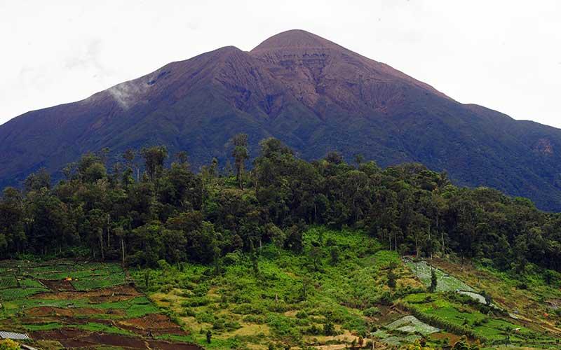 Kawasan Taman Nasional Kerinci Seblat Jadi Gundul Bisnis Com